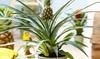 Plantes d'intérieur Ecoworld Easy
