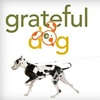 Grateful Dog Daycare - Central Sacramento: $20 for $45 Worth of Services and Products at Grateful Dog Daycare