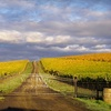 63% Off Wine Tasting and Wine in McMinnville