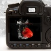 80% Off Digital-Photography Class