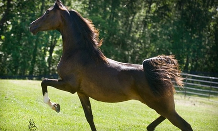 Rooker Training Stable - Fenton: $40 for Two Private Horseback-Riding Lessons at Rooker Training Stable in Fenton ($80 Value)