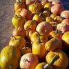 Half Off at Corona Pumpkin Farm in Lake Mathews