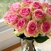 Organic Bouquet: Eco-Friendly Flowers, Plants, Gourmet Treats, and Gifts from Organic Bouquet (Up to 56% Off). Two Options Available.