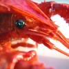 Up to 51% Off Lobster-Fishing Trip in Oxnard