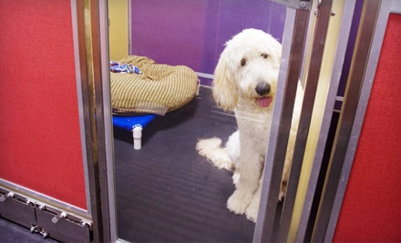 3-Night Dog Boarding in a Studio Suite (up to a $57 value) - Irmo Pet Retreat in Columbia