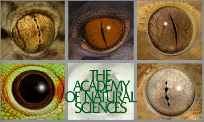Academy of Natural Sciences - Logan Square: $6 for One General-Admission Ticket to the Academy of Natural Sciences