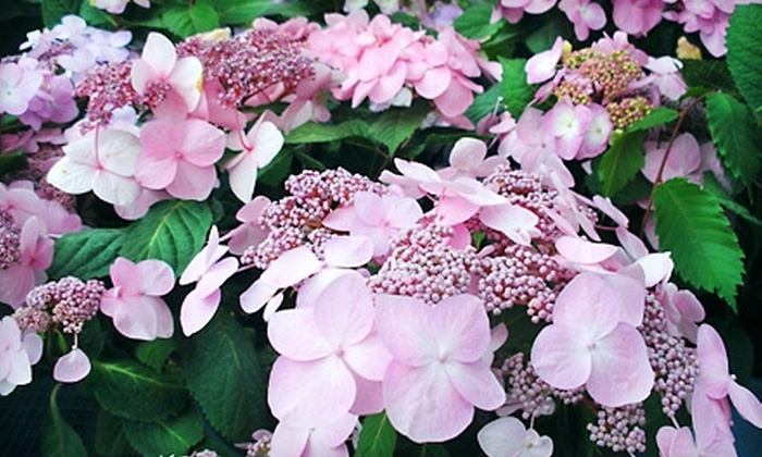 Neuhouser - Fort Wayne: $20 for $40 Worth of Plants, Gardening Accessories, Landscaping, and Gifts at Neuhouser
