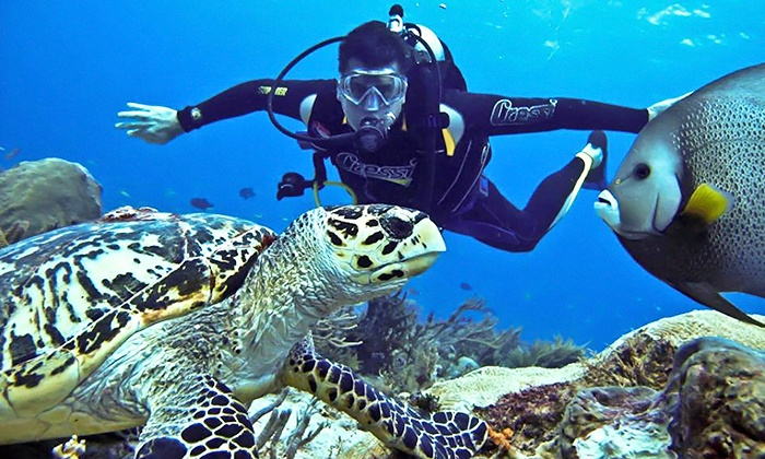 Oceanblue Divers - Waterside Swim and Health Club: Scuba Certification for One or Two at Oceanblue Divers