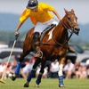 51% Off VIP Pass to Polo Match in Toughkenamon
