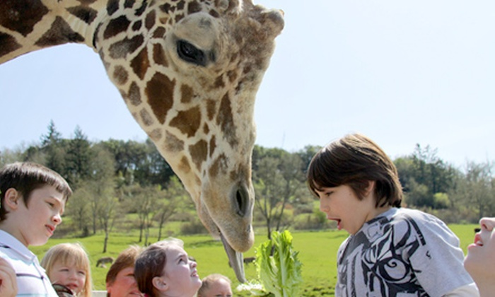 Wildlife Safari - Tenmile: Drive-Through Wildlife Safari for Two Adults or Two Children in Winston (Half Off)