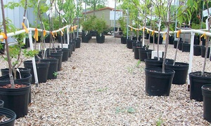 Arbolito Horticulture: Native and Adapted Plants, Trees, and Shrubs at Arbolito Horticulture (41% Off). Two Options Available.