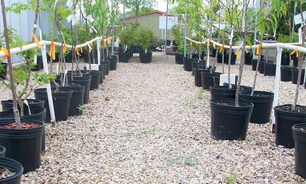 Native and Adapted Plants, Trees, and Shrubs at Arbolito Horticulture (41% Off). Two Options Available.