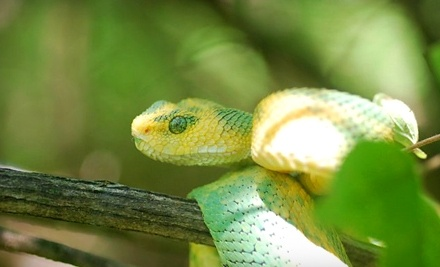 Kentucky Reptile Zoo: Adult Admission - Kentucky Reptile Zoo in Slade