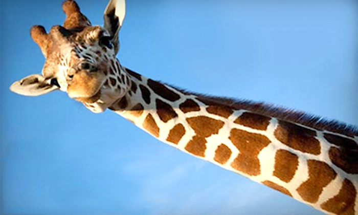 African Safari Wildlife Park‎ - Port Clinton: $5 for One Ticket to Drive-Thru Safari at African Safari Wildlife Park in Port Clinton (Up to a $17.95 Value)