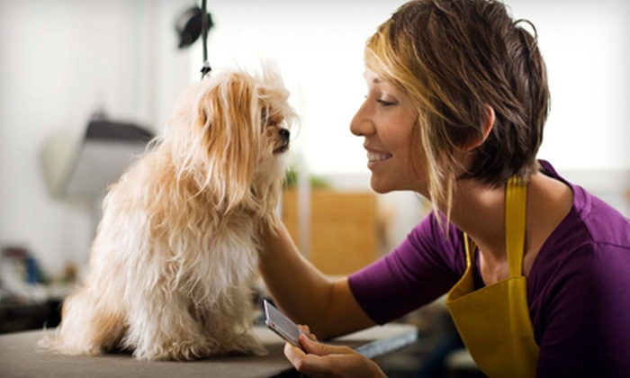 Hand to Paws - Scenic Park: Pet-Grooming Services and Products at Hand To Paws (Up to 53% Off). Two Options Available.