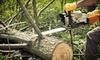 Hayden's Ridge Tree Service: $75 for $150 Toward Tree Removal, Pruning, Bracing, or Planting from Hayden's Ridge Tree Service