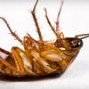 Up to 61% Off Pest Control