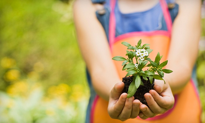 Alltex Nursery Landscapes - Kerrville: $10 for $20 Worth of Plants and Garden Supplies at Alltex Nursery Landscapes in Kerrville