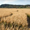 Up to 51% Off Autumn Farm Adventures
