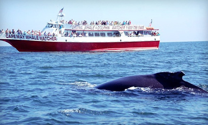 Cape May Whale Watcher - Cape May: Three-Hour Whale-and-Dolphin-Watching Tour for Two or Four from Cape May Whale Watcher (Up to 56% Off)