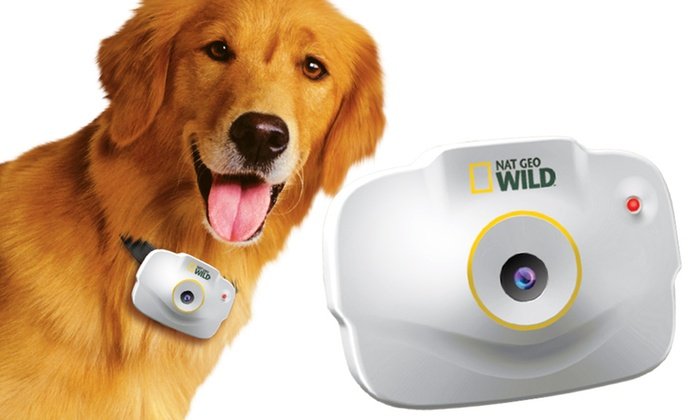 National Geographic Pet's-Eye-View Camera : National Geographic Pet's-Eye-View Camera. Free Returns.