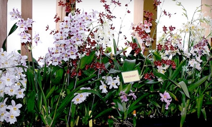 New Earth Orchids - Santa Fe: $15 for an Orchid Plant at New Earth Orchids in Santa Fe ($29.95 Value)