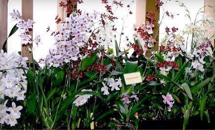 New Earth Orchids - New Earth Orchids in Santa Fe