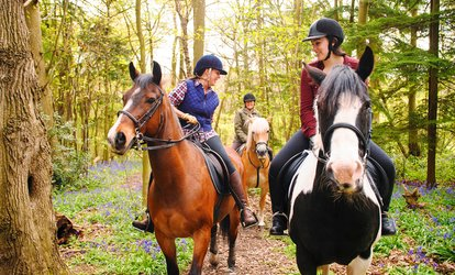 image for One-Hour Horse Riding Lesson for Child or Adult at Four Winds Equestrian Centre (Up to 35% Off)