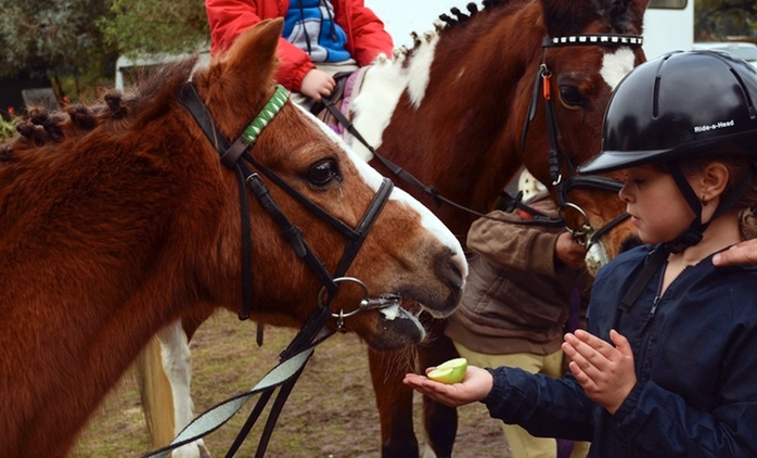 Horse Riding Lessons from R125 at Fat Pony Riding Centre (Up to 60% Off)