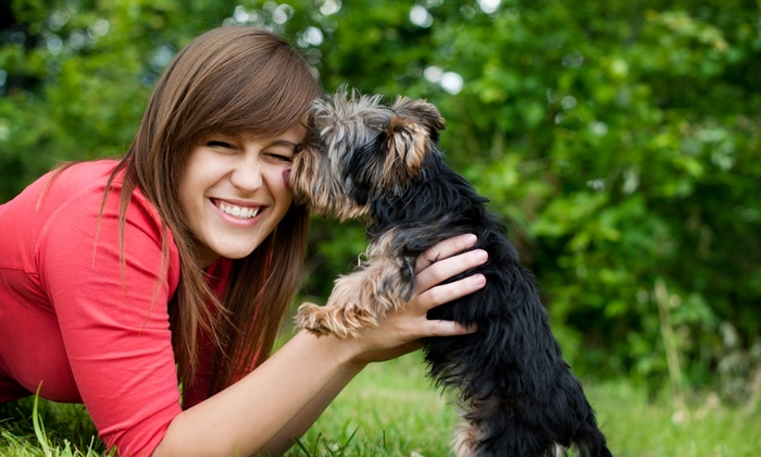 43rd Ave. Animal Hospital - North Mountain: Up to 50% Off Veterinarian — 43rd Ave. Animal Hospital Valid Monday - Friday 8 AM - 5 PM