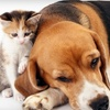 3A Pet Sitting: $20 for Two 30-Minute Pet-Sitting Visits from 3A Pet Sitting ($44 Value)
