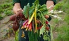Farm Share Ltd. - Upper West Side: $25 for a Sample Box of Organic Vegetables from Farm Share Ltd. ($50 Value)