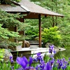 Up to 52% Off Japanese-Garden Outing in Rockford