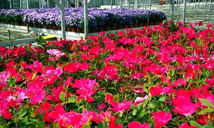 Stacy's Garden Center - York: $15 for $30 Worth of Flowers and Home and Garden Décor at Stacy's Garden Center in York