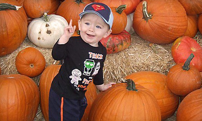 Apple Annie's Produce and Pumpkins - Willcox: $11 for a Corn-Maze Outing for Two and a Take-Home Pumpkin at Apple Annie's Produce and Pumpkins in Willcox ($22 Value)