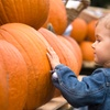 Up to 53% Off Fall Festival
