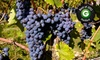 Newport Vineyards - Eustis-Easton's Pond: Vineyard Tour and Tasting for Two or Four at Newport Vineyards (Up to Half Off)