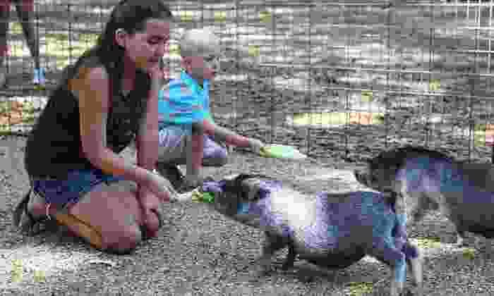 Green Meadows Farm - Green Meadows Farm: Petting-Farm Visit for One or Two at Green Meadows Farm (Up to 44% Off)