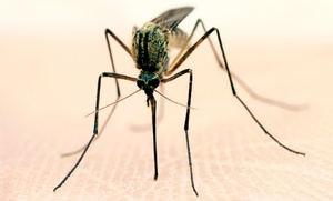 Mosquito Terminators of East Tennessee: $29 for Mosquito Barrier Spray for 1 Acre from Mosquito Terminators of East Tennessee ($139 Value)