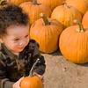 30% Off Pumpkin Picking