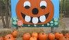 Blase Family Farm - Rockwall: Pumpkin-Patch Outing for Two or Four at Blase Family Farm (Up to 43% Off)