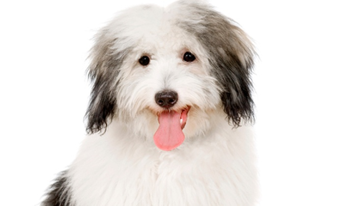 Arizona Pet Resort - Phoenix: Microchipping, Registration, and Toenail Trim or Three Nights of Dog Boarding at Arizona Pet Resort (Up to 59% Off)