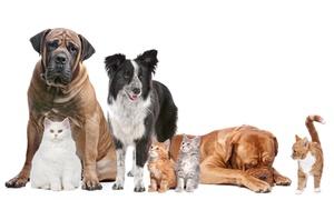 Cutler Bay Animal Clinic: Cat or Dog Wellness Exam, or Annual Pet Checkup at Cutler Bay Animal Clinic (78% Off)