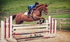 plainbrooke farm - Birchrunville: Private Horseback-Riding Lesson for One or Two at Plainbrooke Farm (Up to 56% Off)