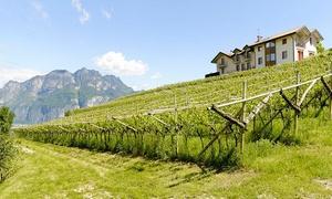 MASO GRENER: Degustazione di 4 vini con tagliere di salumi e formaggi, tour del vigneto e bottiglia in omaggio