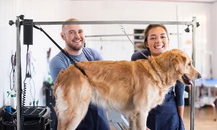 Sesión de peluquería para perro de hasta 30 kg en Peluquería Canina Balki (hasta 54% de descuento)