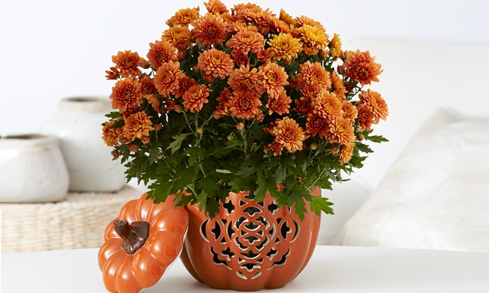 ProPlants: $15 for $30 Worth of Flowering and Potted Plants from ProPlants