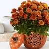 $15 for $30 Worth of Flowering and Potted Plants from ProPlants