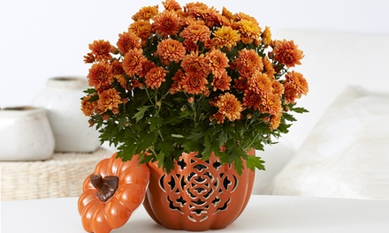 $15 for $30 Worth of Flowers and Potted Plants from ProPlants