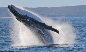 Jervis Bay Wild: Two-Hour Whale Watching Trip for One Child ($14) or Adult ($32) with Jervis Bay Wild (Up to $65 Value)